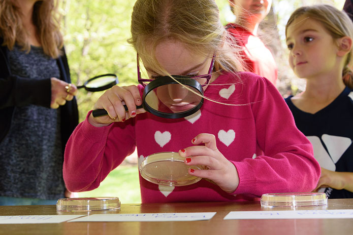 A young scientist inspects a bacteria culture at UNCG's Science Everywhere.